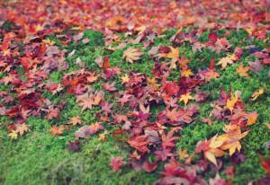 芝生の上に積もる紅葉の葉